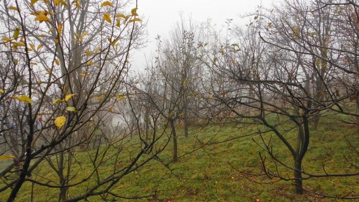 Imagini pentru poze cu desfrunzirea pomilor
